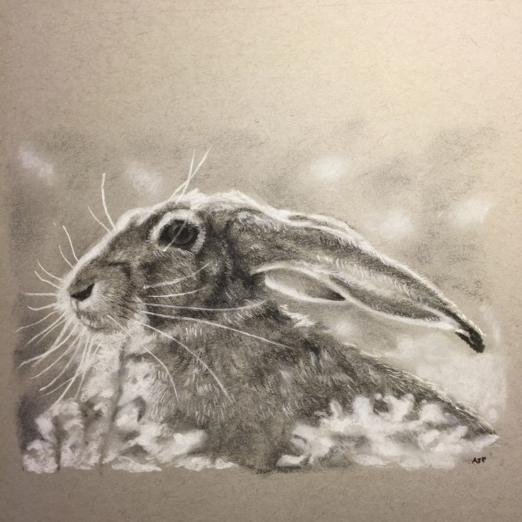 A portrait of a wild hare by artist Andrew Prescott