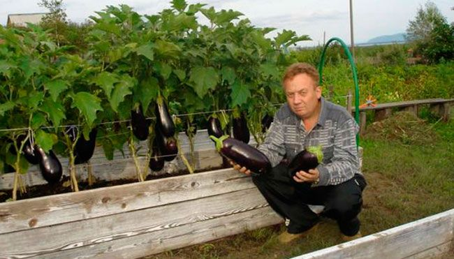 По просьбе многих моих друзей расскажу вам, как я выращиваю овощи. Таким способом уже садят многие дачники. Постараюсь вам объяснить.