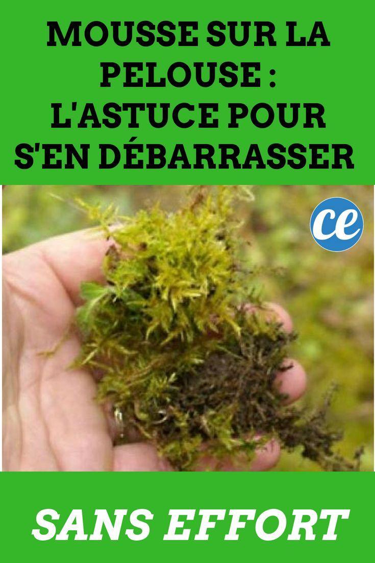 Mousse Sur La Pelouse L Astuce Pour S En Debarrasser Sans Effort Pelouse Et Jardin Arrosage Jardin Pelouse