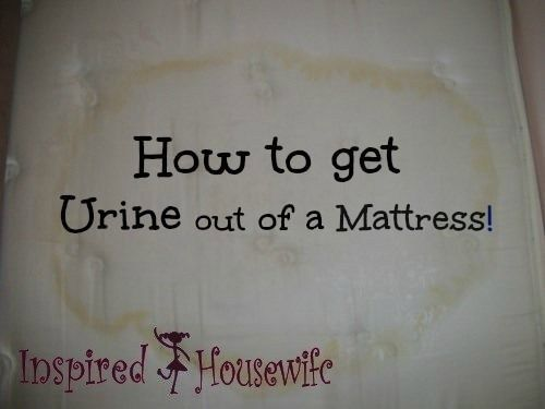 Best Way To Get Cat Urine Out Of A Mattress