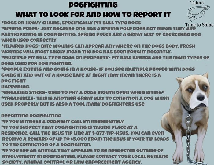 dog-fighting-what-to-look-for