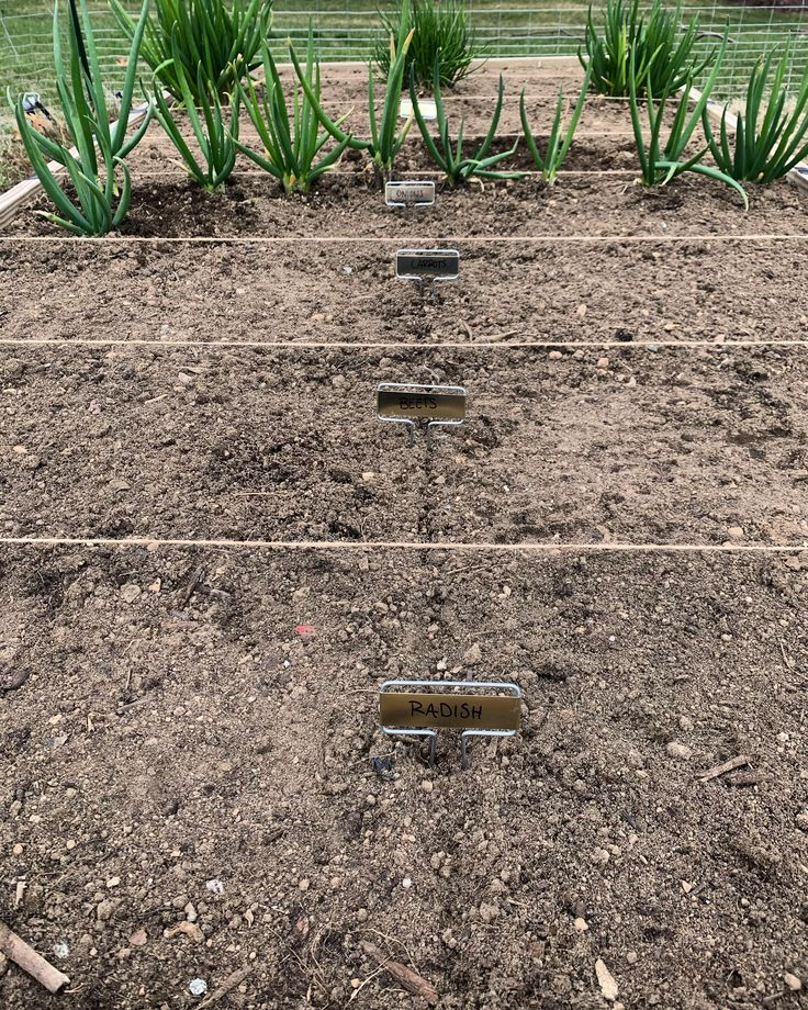 Planted some root veggie seeds today i couldnt wait any
