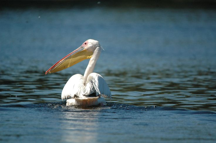 Unesco - Danube Delta in Romania http://www.touringromania.com/tours/long-tours/unesco-world-heritage-from-romania-private-tour-12-days.html