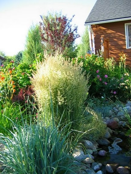 44 best front yard xeriscape images on pinterest for Front yard ornamental grasses