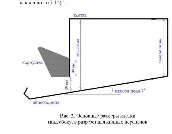 kletka_v_razreze.jpg