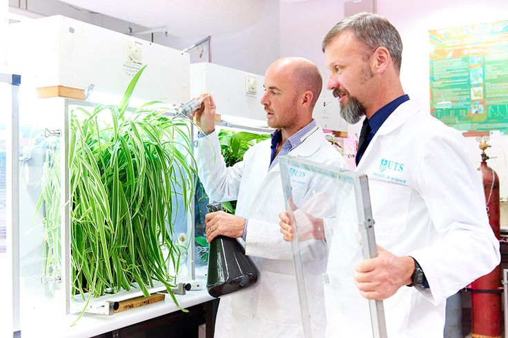 UTS NEWSROOM: Hi-tech plant wall better protects from chemical soup - new research | UTS News Room