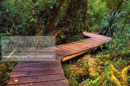 Boardwalk Through Forest, Chiloe National Park, Chiloe Island, Chile