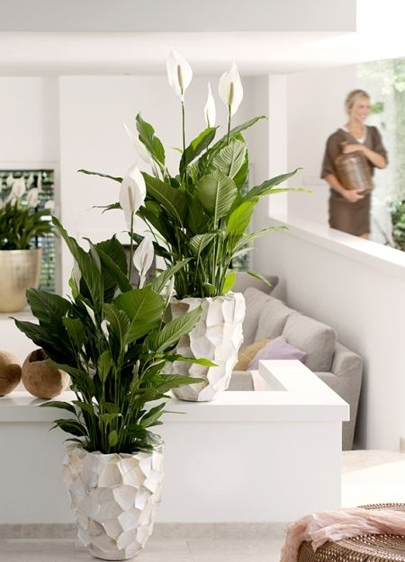 Botanical trends to work into your home. Find this and more interiors inspiration at www.redonline.co.uk