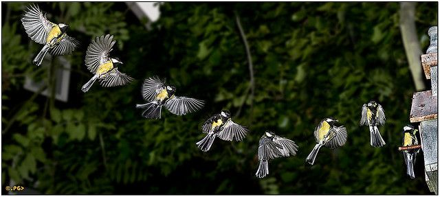 Great example of sequence photography.  Love it.