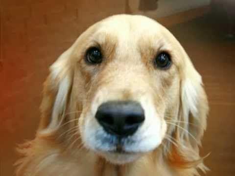Ajax the dog talks about Online Casino Guru
