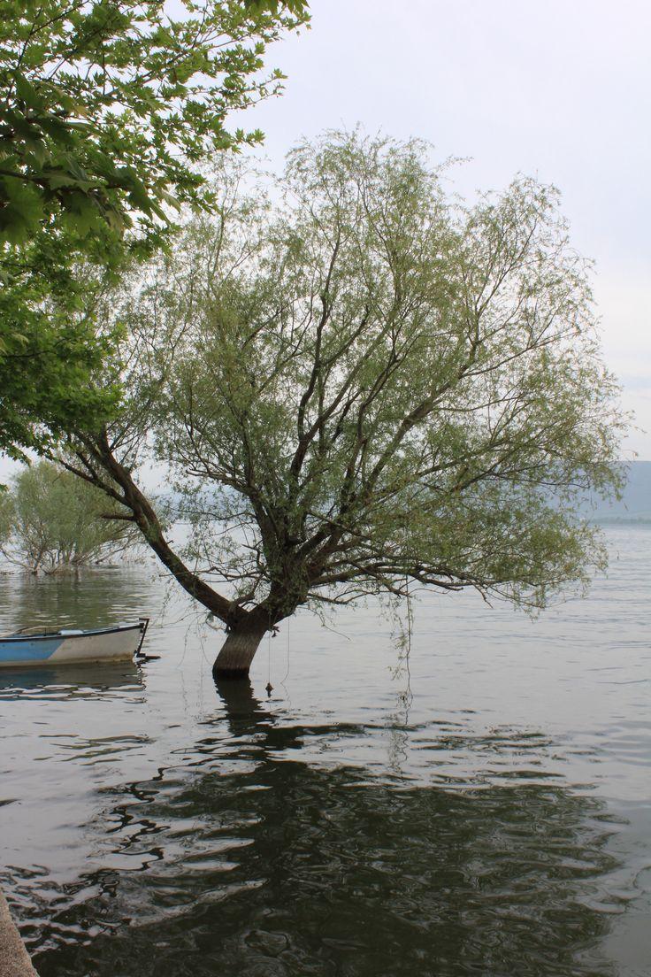 Bursa -Gölyazı