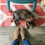 http://lollyjane.com/dog-shedding-home-remedies