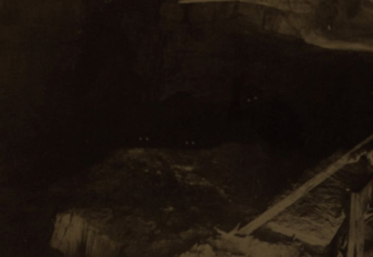 """This photo was taken in 1895 by an amateur photographer named Oren Jeffries. Jeffries was conducting photographic experiments, using super long exposures During one of these experiments, he heard something approach from the deeper recesses of the cave. Frightened, Jeffries abandoned his experiment and set off one of the Blitzlicht flashes.Jeffries saw three """"humanoid"""" creatures staring at him from the shadows and took off running in the other direction. This image was on the flim"""