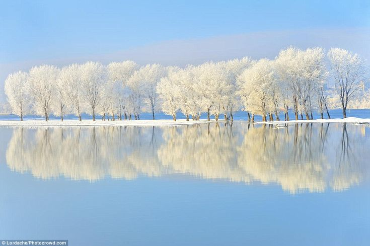Esta imagem do rio Danúbio foi tomada perto de Galati, na Roménia, e mostra a água na frente da inundação árvores a partir do corpo de água