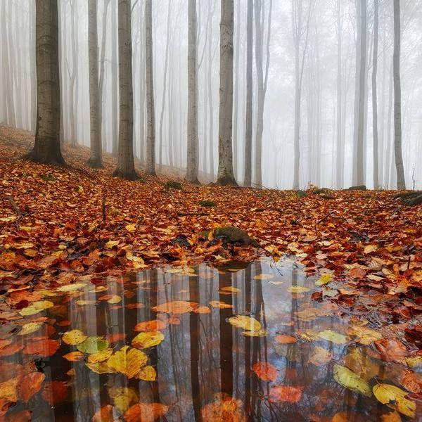Лесной пост. №3. фотография, лес, Природа, деревья, длиннопост