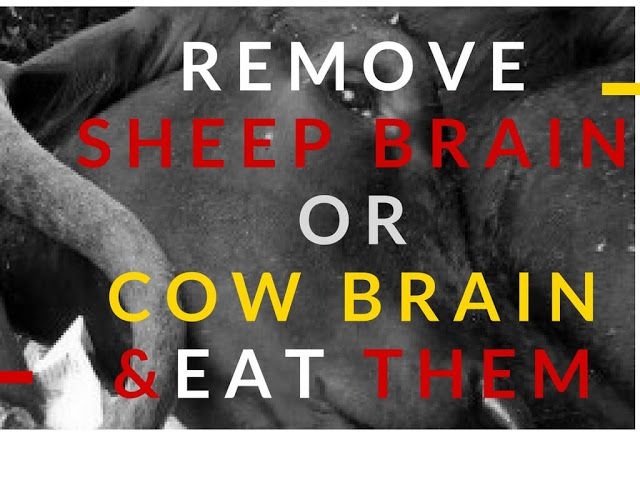 Do you know how to remove sheep brain or cow brain? Then learn how then cook and eat them