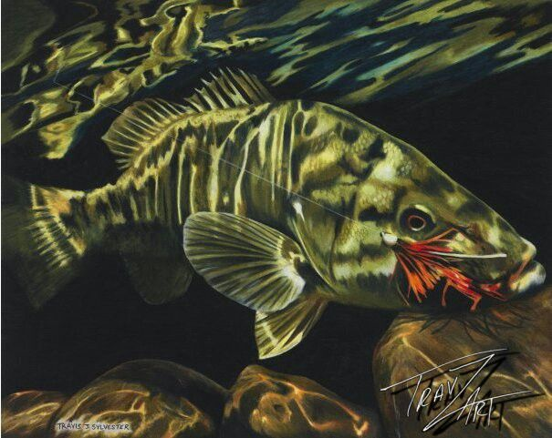 Small Mouth Bass On The Fly Colored Pencil Drawing By Travis J Reference Photo Courtesy Of Rebekka Redd