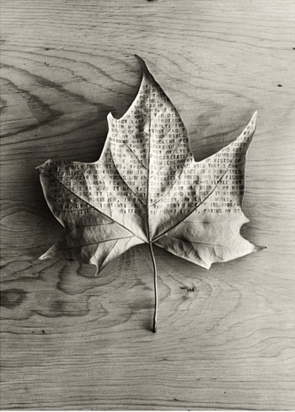 = maple leaf |> rustic  Photography by Chema Madoz #typography #leaf