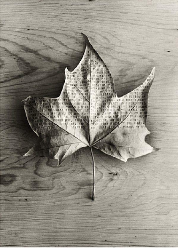 = maple leaf |> rustic  Photography by Chema Madoz #typography #leaf