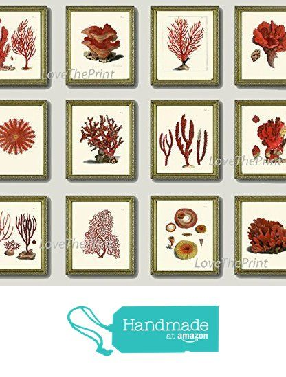 Coral Set of 12 Prints Antique Beautiful Red Corals Sea Ocean Marine Nature Home Room Decor Wall Art Unframed from LoveThePrint https://www.amazon.com/dp/B018SVW50A/ref=hnd_sw_r_pi_dp_AurEzbNDN6CAB #handmadeatamazon