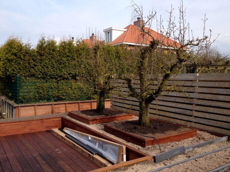 2 perenbomen geplant 60 jaar oud