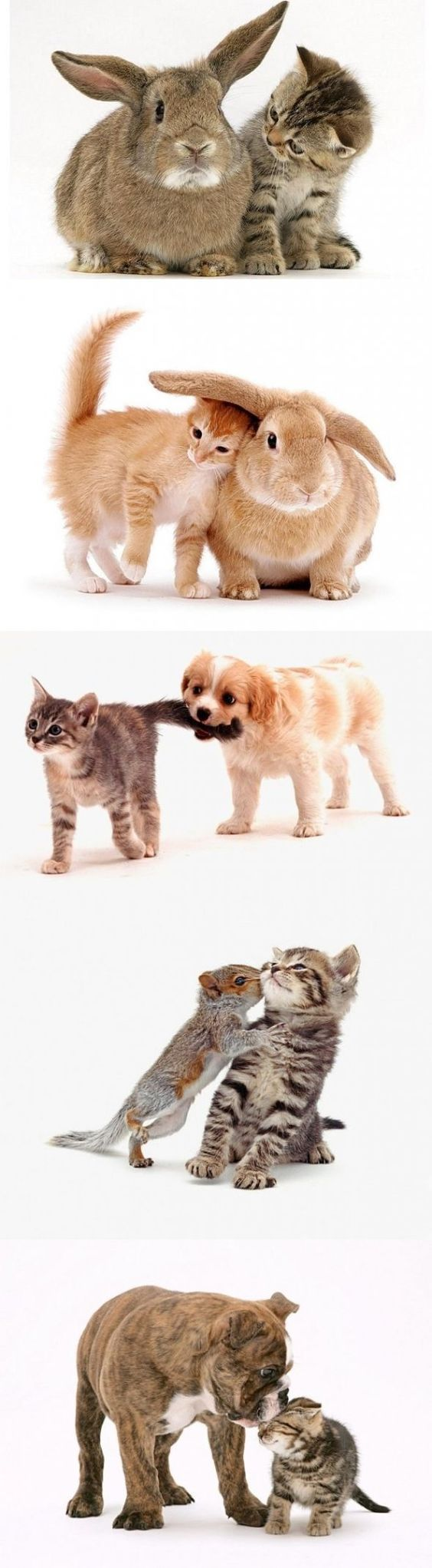 Adorable animals/ cute animals/ cats/ dogs Animals can be friends with anything