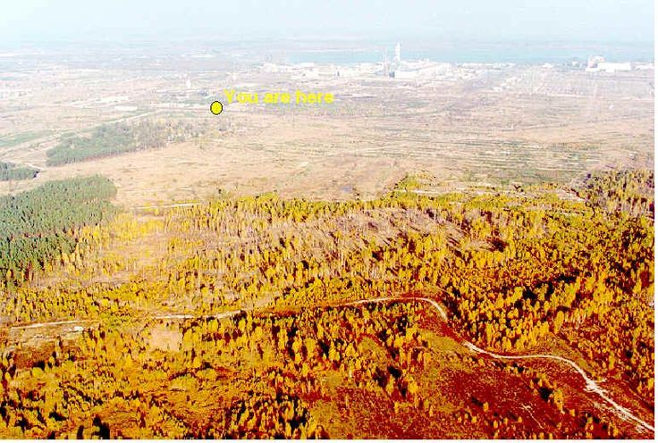 The major plume of radiation released by the Chernobyl Nuclear Accident was carried directly over what is now called the Red Forest. Radioactive particles settled on trees, killing areas of pine forest.