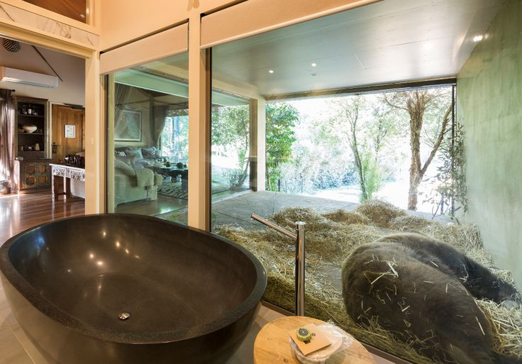 Fancy bathing next to a bear? Here are some of Australia's most eclectic accommodation options.