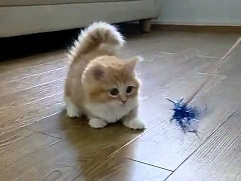 Funny Videos 2014 - Funny Cats Video - Funny Cat Videos Ever - Funny Animals Funny Fails 2014 - YouTube