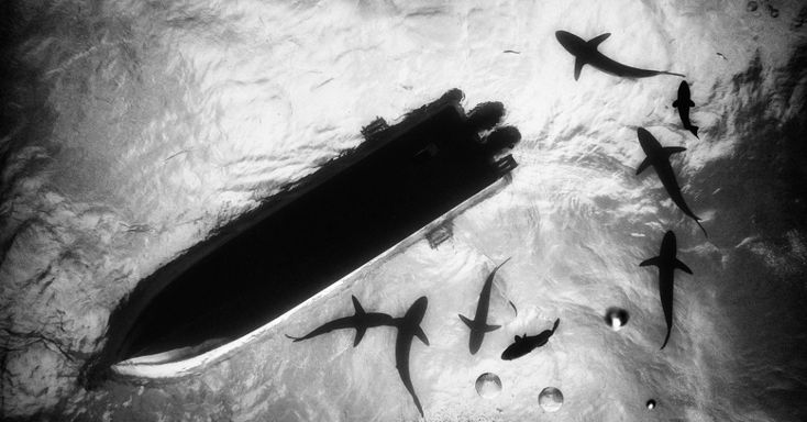 25 melhores ideias sobre imagens de tubar es no pinterest for Como llegar a jardines de la reina cuba