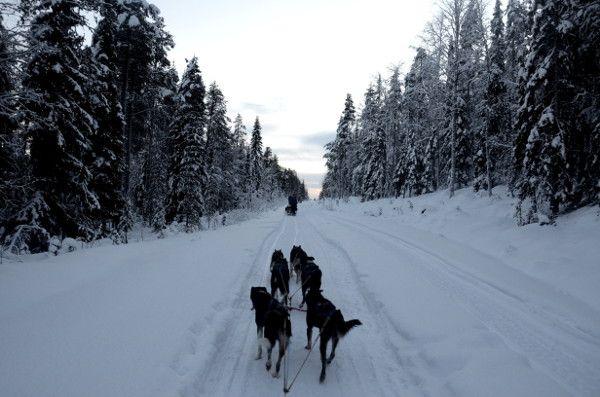 http://elpachinko.com/viajes-a-finlandia/laponia-con-ninos-trip-trup/  Viaje a Laponia Finlandesa con niños: renos, huskies, Papá Noel, nieve y mucha diversión