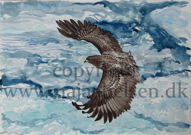 Sea Eagle, hovering over the Ice. Watercolour. Original sold. 51 x 36 cm. 2016 by Naja Abelsen. www.najaabelsen.dk