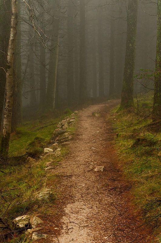 Dublin mountains, Ireland forest, fog