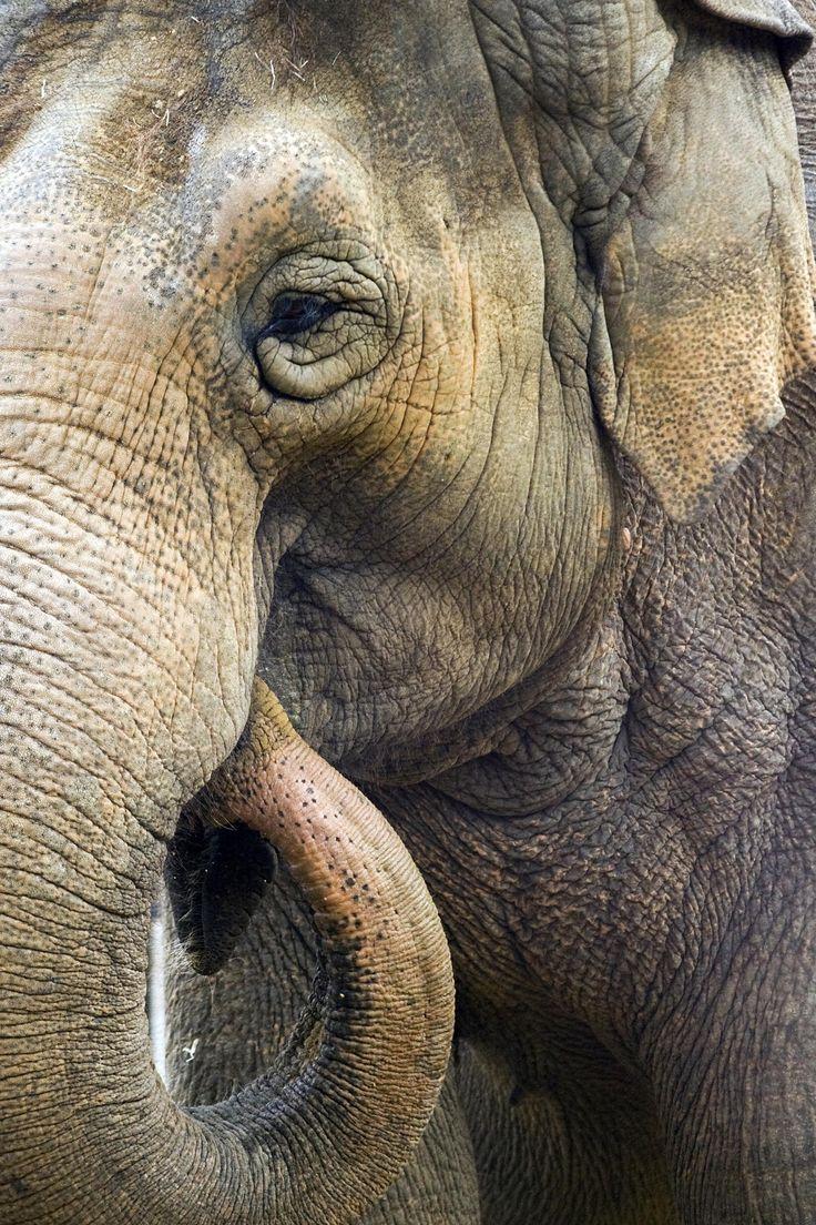 Elephant by Jesse Soll on 500px | Fire Animals • Wildlife ...