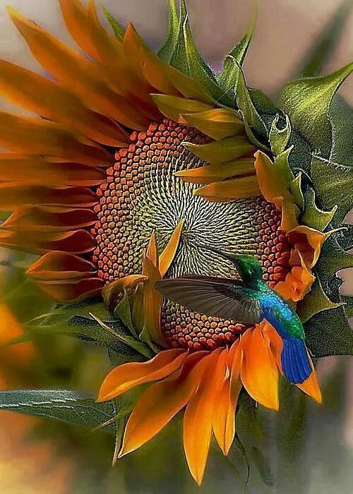 Sunflower & hummingbird