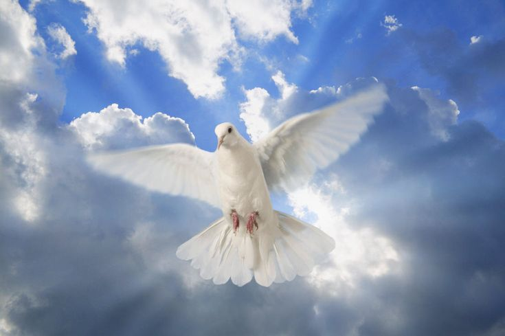 Praying in the spirit: a psychiatrist's report, and more...