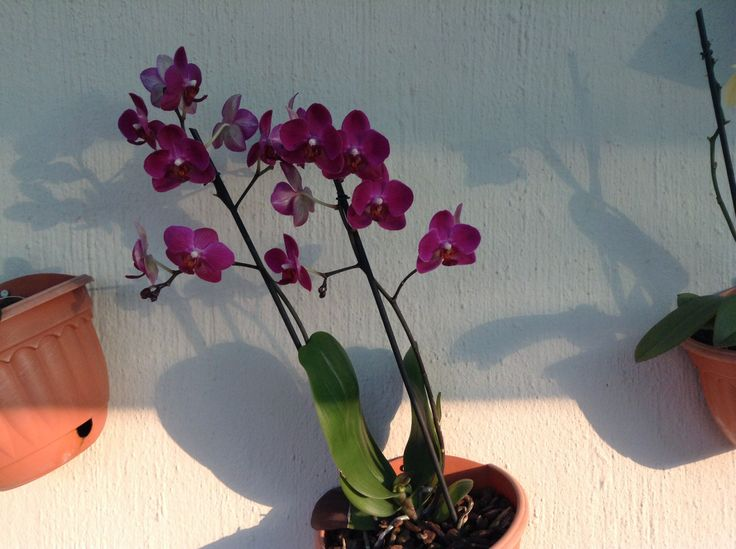 Purple orchid on the patio wall. All thanks to my husband great idea of putting up a shade net roof. Thanks love