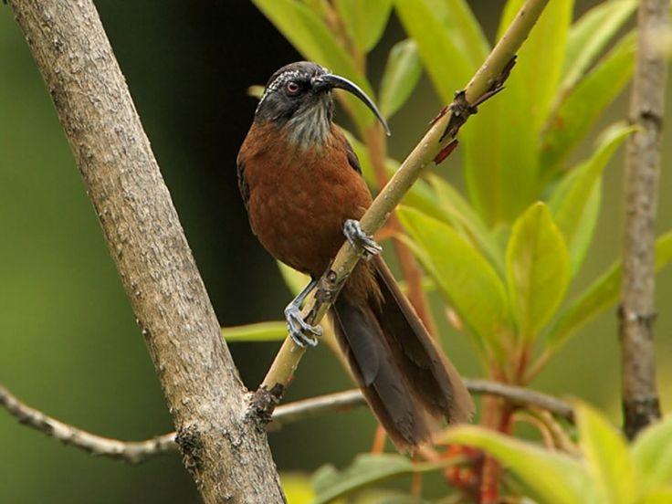 Mouling National Park - in Arunachal Pradesh, India