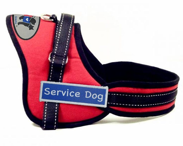 Beautiful 43 best Service dog images on Pinterest | Service dogs, Service  JJ94