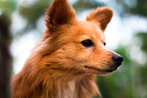 Sapevate che esiste un oroscopo canino? Ebbene sì. A seconda della data in cui è nato il vostro cane, avrà delle qualità diverse dagli altri.