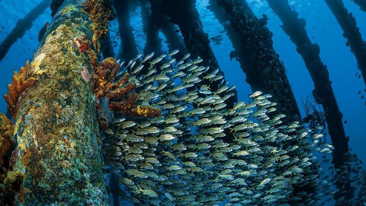 22 Reasons to Dive Bonaire  Travel  2018 Scuba Diving Magazine Readers Choice Winner  It may be known for its shore diving but Bonaire has earned its place as the diviest island in the world.  If you like our pins please follow us: http://ift.tt/2qGg6EH #ScubaDivingMagazine