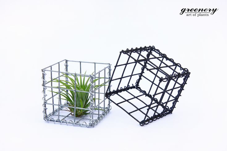 Gabion cage with air plant Gabion creations by greenery #gabion #gabioncreations #pots #greenery #airplants #succulents #cactus #plants #chania #greece