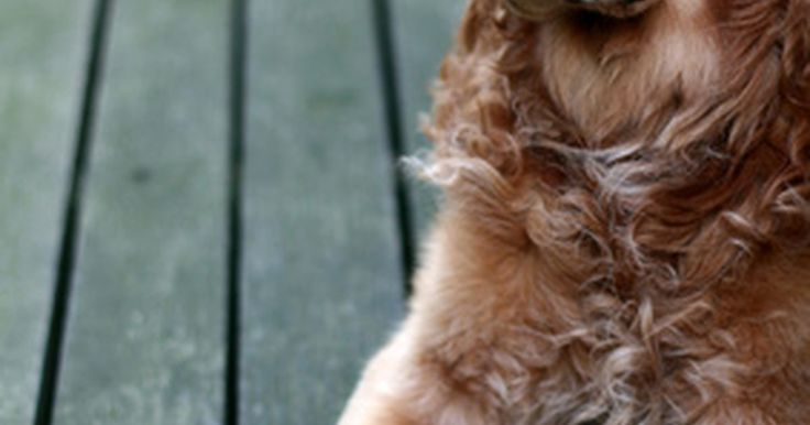 Cómo tratar la sarna con ivermectina. La sarna en los perros es causada por pequeños ácaros visibles sólo bajo un microscopio. Estos ácaros pueden vivir en la raíz de cada cabello o crear túneles debajo de la capa superior de la piel, causando picazón, enrojecimiento y pérdida del pelo. El daño del ácaro también puede conducir a infecciones de la piel, que en casos graves pueden poner ...