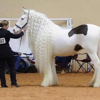 Il est trop magnifique le cheval rêver