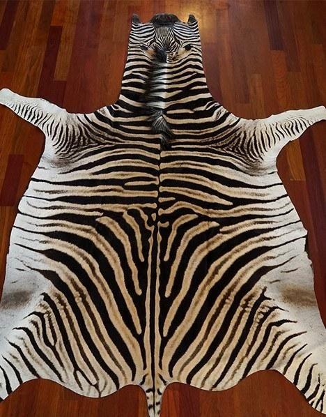 M s de 25 ideas incre bles sobre zebra skin rug en - Alfombras de cebra ...
