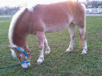 A me i cavalli piacciono molto.1E Alberghiero - Presentazione PERSONALE - Community - Google+