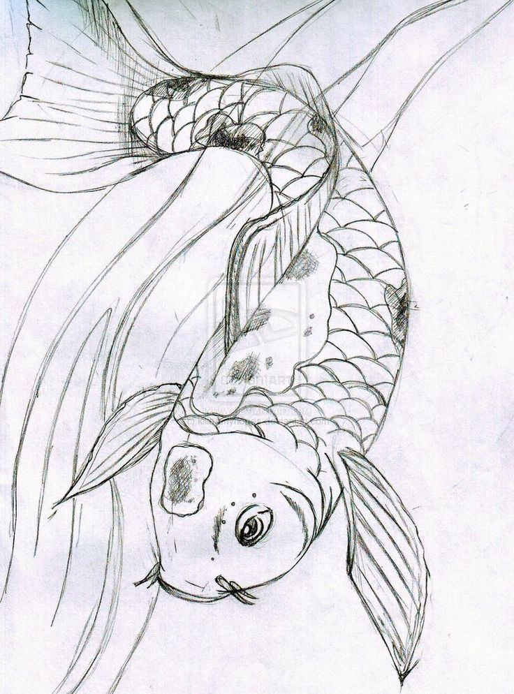 1000 ideas about koi fish drawing on pinterest fish for Koi fish sketch