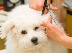 Consejos para cortarle el pelo a un perro. Para llevar a cabo el corte, tienes que elegir un lugar donde tu perro se sienta cómodo y relajado.