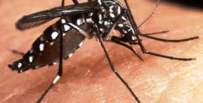 Japan: First Dengue Cases after 70 years