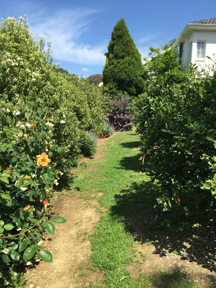 Our citrus grove